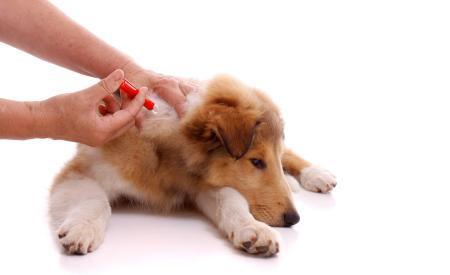 hunde-impfen-ia