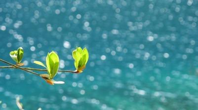 spring-1746874_640