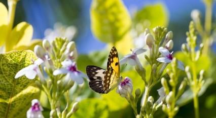 butterfly-2103976_640