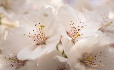 flowers-3269453_640